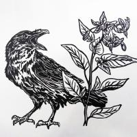 Crow and Common Nightshade