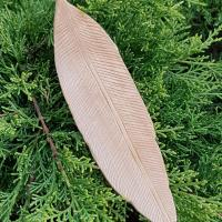 Basswood feather